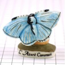 フェブ・イカルスヒメシジミ蝶々