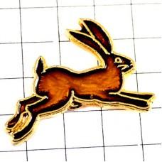 ウサギ兎うさぎ