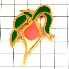 ピンズ・ラディッシュ二十日大根ビート野菜