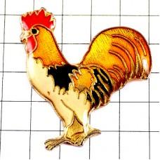 アヒル家鴨ニワトリ鶏